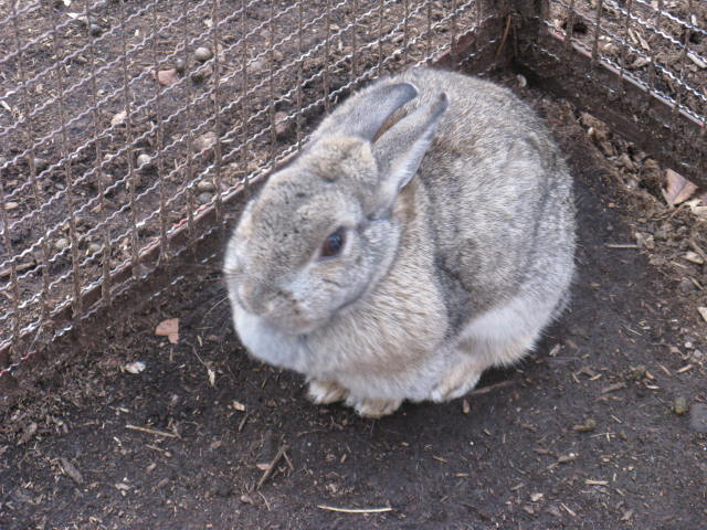 ウサギの画像 p1_14