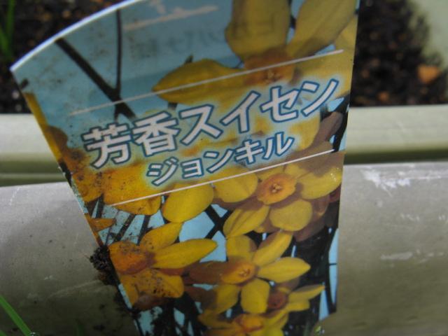 http://www.nandemo-zukan.net/plant/img/2010/04/21/20851.JPG